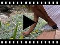 Video from Alpargatas Riscas Bicolor Crianças e Adultos